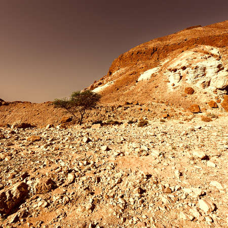 Canyon in the Judean Desert on the West Bank of the Jordan River at Sunset, Vintage Style Toned Picture photo