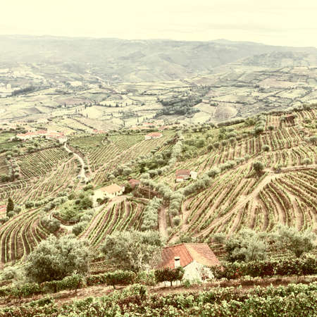 extensive: Extensive Vineyards on the Hills of Portugal, Vintage Style Toned Picture Stock Photo