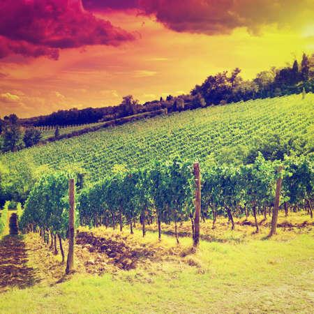 vi�edo: Colina de Toscana con vi�edos en el Sunset