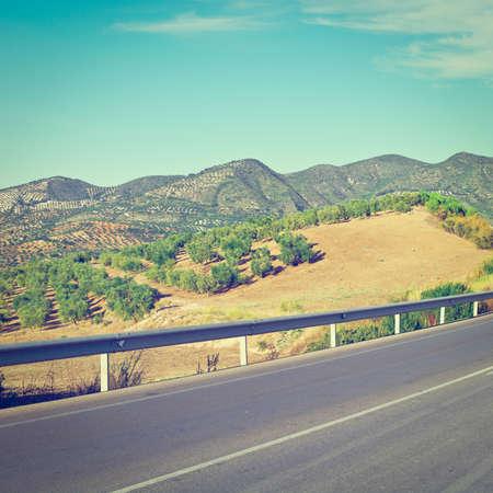 olive groves: Winding Asphalt Road between the Olive Groves in Spain