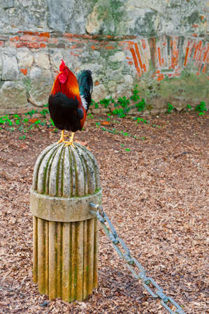 rooster: Rooster Sitting on a Stone Pedestal on the Background of the Brick Walll
