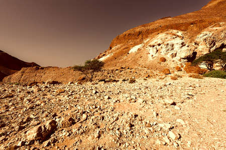 judean hills: Canyon in the Judean Desert on the West Bank of the Jordan River at Sunset, Vintage Style Toned Picture