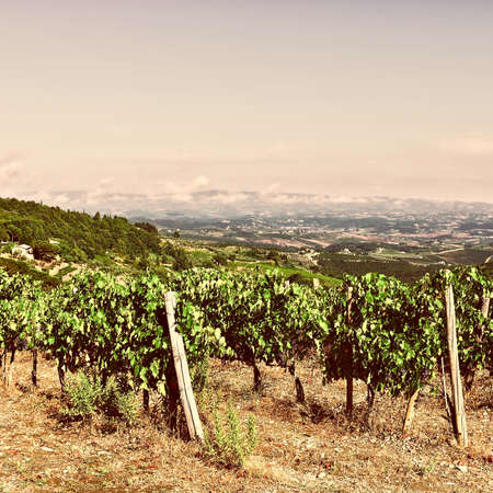 tuscan style: Tuscan Landscape with Vineyards at Sunset, Retro Image Filtered Style