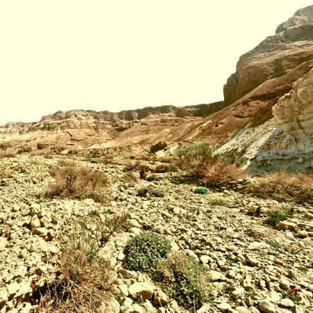 west bank: Stone Desert on the West Bank of the Jordan River, Vintage Style Toned Picture