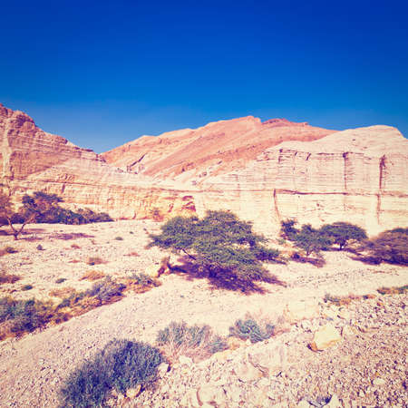 canyon negev: Canyon and Rocky Hills of the Negev Desert in Israel