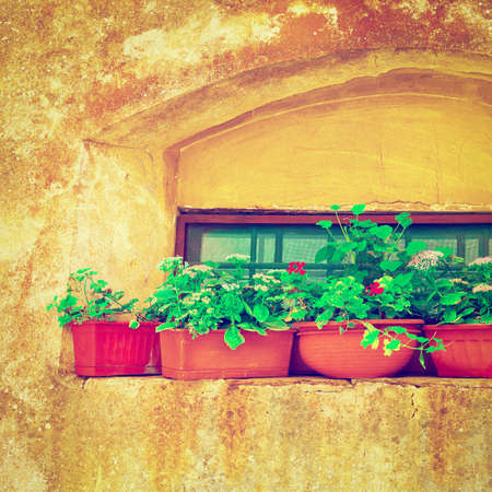 resplendence: Italian Window Decorated with Fresh Flowers,