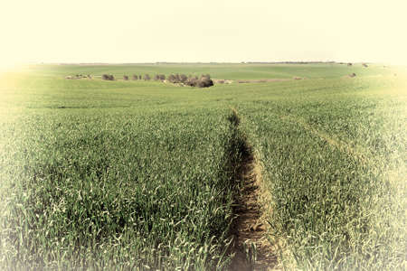 israel farming: Green Fields in Israel, Spring, Retro Image Filtered Style