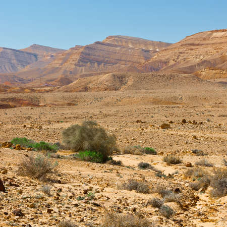 nature reserves of israel: Green Plants of the Negev Desert in Israel Stock Photo