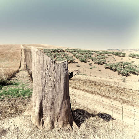 olive groves: The Tree Stump in Front of  Olive Groves among Wheat Fields of Sicily in Italy, Retro Image Filtered Style