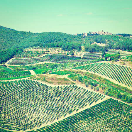 olive groves: Small Medieval Italian City in Tuscany Surrounded by Vineyards, Olive Groves and Cypress Alleys