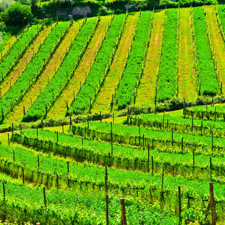 Hills of Tuscany with Vineyards in the Chianti Region Stock Photo