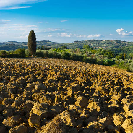 olive groves: Small Medieval Italian City in Tuscany Surrounded by Plowed Fields, Vineyards and Olive Groves