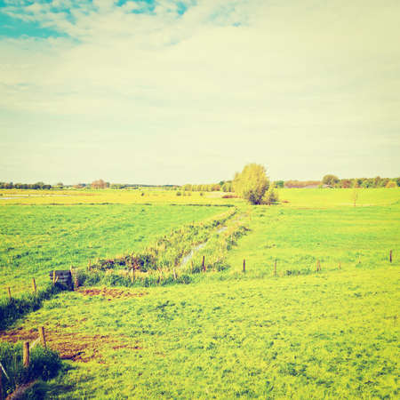 reclaimed: Pasture on Land Reclaimed from the See in Netherlands
