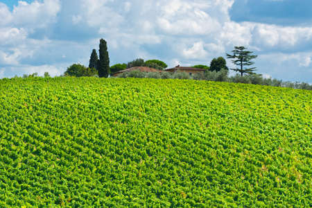 olive groves: Italian Farmhouse in Tuscany Surrounded by Vineyards, Olive Groves and Cypress Alleys