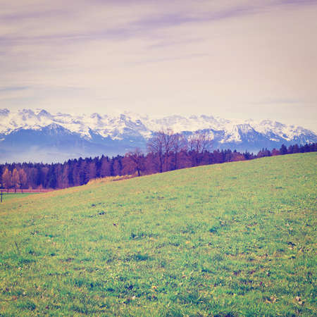 Meadow on the Background of Snow-capped Alps in Switzerland Stock Photo