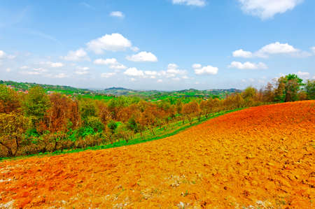 olive groves: Plowed Fields and Olive Groves on the Background of the Italian Villages in Piedmont