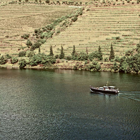 portugal agriculture: Vineyards in the Valley of the River Douro, Portugal, Vintage Style Toned Picture