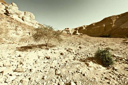 judean desert: Judean Desert on the West Bank of the Jordan River, Retro Image Filtered Style