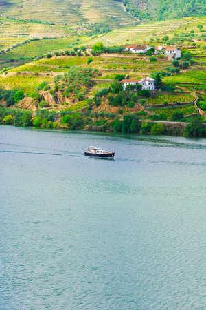 vi�edo: Vi�edos en el Valle del r�o Douro, Portugal