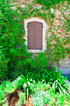 resplendence: Closed Window on the Facade of a Stone House Decorated with Bindweed in Tel Aviv, Israel