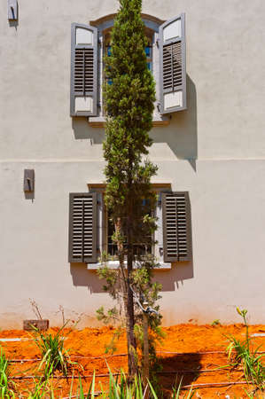 resplendence: Cypress on the Backgraund of the Old Building in Tel Aviv, Israel Stock Photo