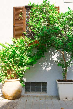 resplendence: Window Decorated with Plants in Tel Aviv Stock Photo