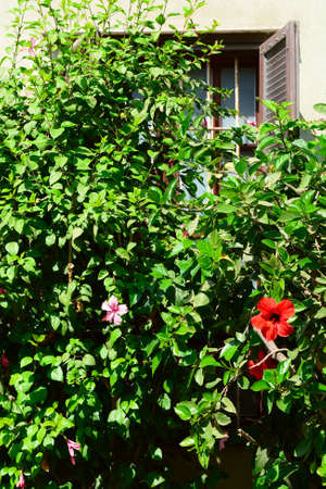 resplendence: Window Decorated with Flower in Tel Aviv Stock Photo