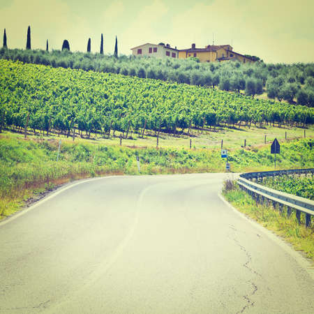 olive groves: Italian Farmhouse near the Asphalt Road Surrounded by Vineyards, Olive Groves and Cypress Alleys, Instagram Effect Stock Photo