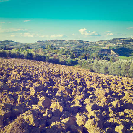 olive groves: Small Medieval Italian City in Tuscany Surrounded by Plowed Fields, Vineyards and Olive Groves, Instagram Effect