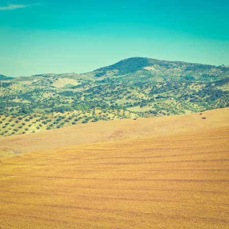 olive groves: Olive Groves and Plowed Sloping Hills of Spain in the Autumn,  Effect