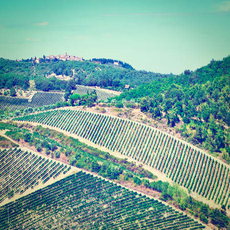 olive groves: Small Medieval Italian City in Tuscany Surrounded by Vineyards, Olive Groves and Cypress Alleys, Instagram Effect