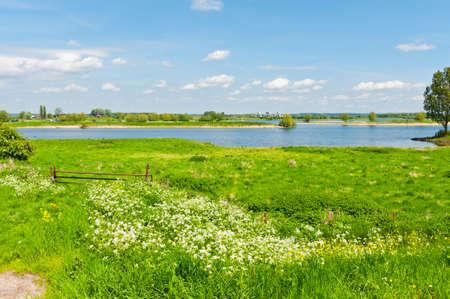 Weiland aan de oevers van de Rijn in Nederland