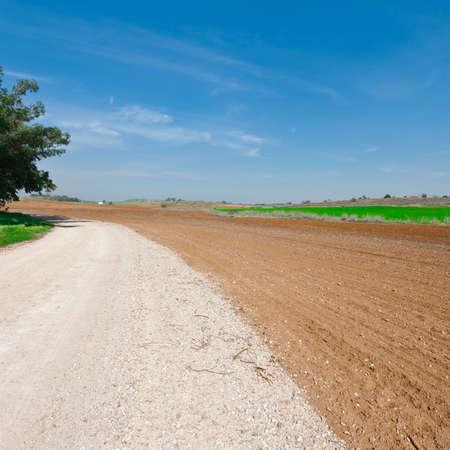 israel farming: Dirt Road between Plowed Fields in Israel Stock Photo