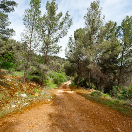 galilee: Dirt Road in the Forest of Galilee in Israel