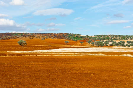 olive groves: Olive Groves and Plowed Sloping Hills of Spain in the Autumn