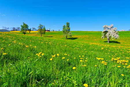 tree plantation: Flowering Trees Surrounded by Sloping Meadows in Switzerland