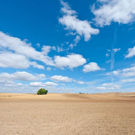 plowed: Plowed Fieelds in Spain