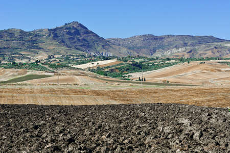 olive groves: Olive Groves and Plowed Sloping Hills of Sicily in Spring