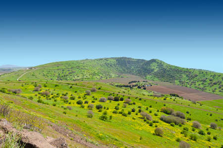 the golan heights: Meadows in Golan Heights, Early Spring