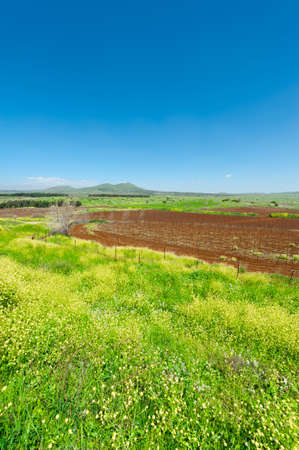 israel farming: Rows of Vines on the Field in Golan Heights, Early Spring