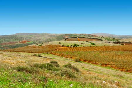 galilee: Fields of Galilee in Israel