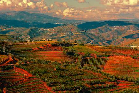 Uitgestrekte wijngaarden op de heuvels van Portugal bij zonsondergang Stockfoto
