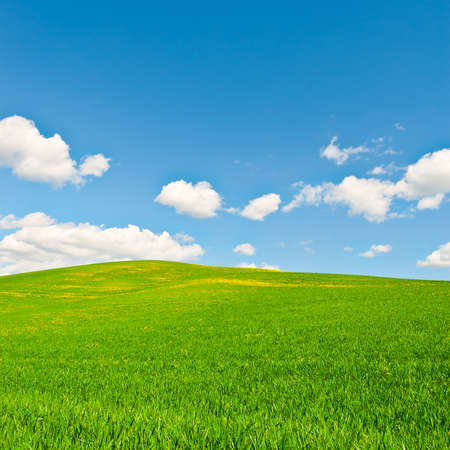 meadow: Green Sloping Meadows of Tuscany