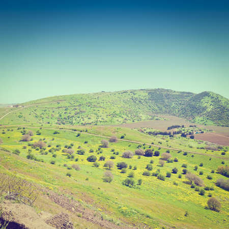 heights: Meadows in Golan Heights, Early Spring