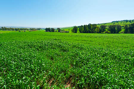 israel farming: Jezreel Valley at the Foot of the Mount Tabor in Israel Stock Photo