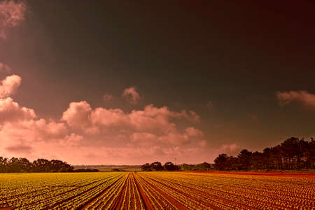 portugal agriculture: Rows of Fresh Young Green Seedling in Portugal at Sunset Stock Photo