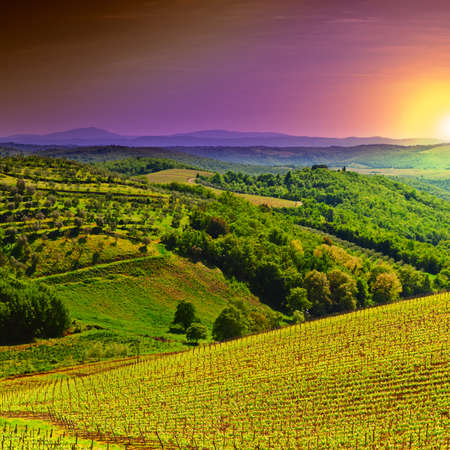 Hill of Tuscany with Vineyard in the Chianti Region, Sunrise Stock Photo