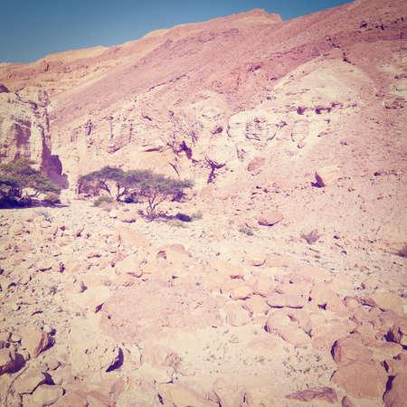 negev: Dry Riverbed in the Negev Desert