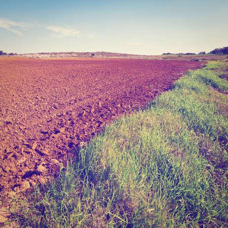 suelo arenoso: La pobreza del suelo de arena después de la cosecha en Israel