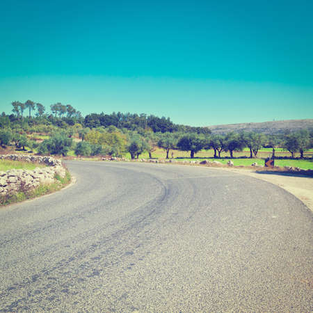 Asphalt Road between Hills Covered with Olive Groves in Portugal,